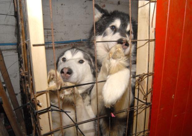 Dogs4Us Leeds Vet