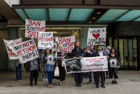 Labour Boycott Dogs4Us